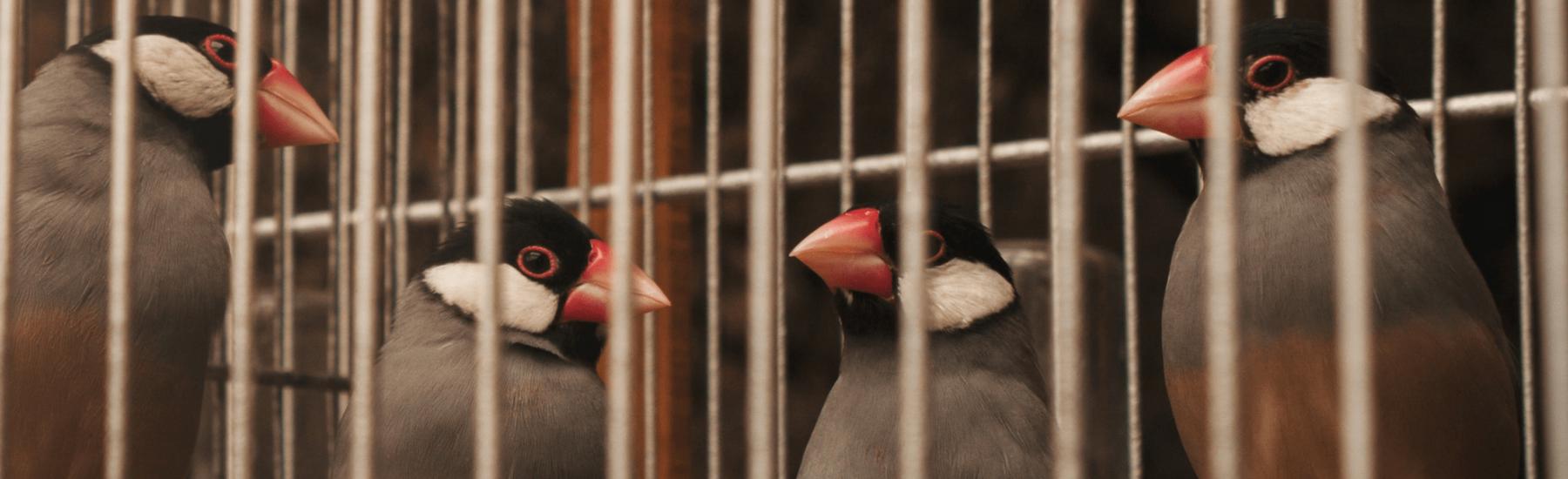Service-birds