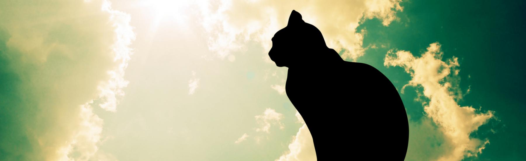 Service-cat-euthanasia