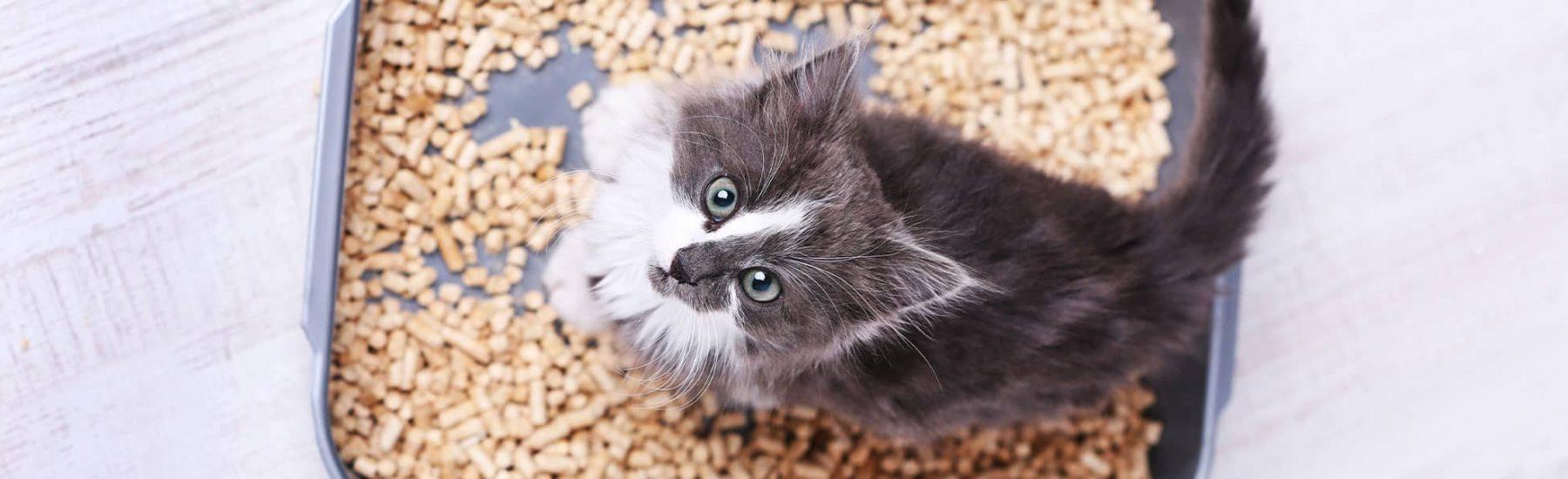 cat_fecal2
