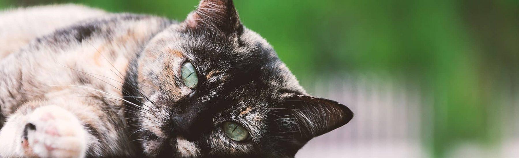 cat_old