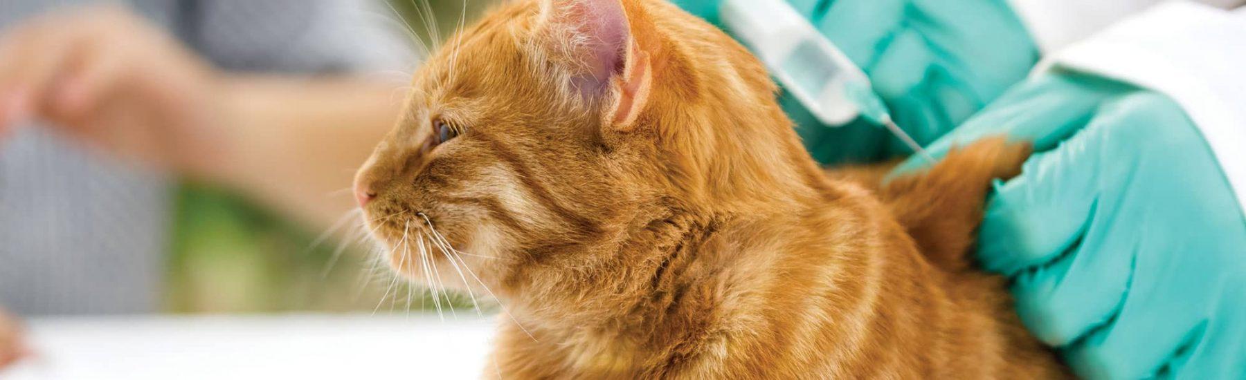cat_vaccinations