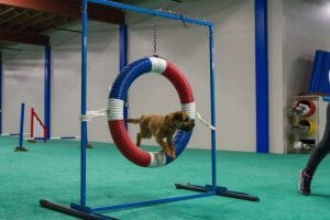 dog agility loop jump